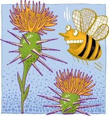 California Yellow Star Thistle Honey